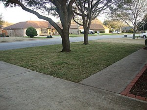 Front Yard - S. Smith